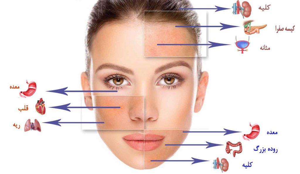 پوست در طب سنتی